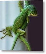 Anole Lovers Metal Print