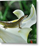 Anole On A White Lily Metal Print