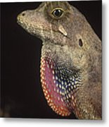 Anolis Lizard Portrait Peru Metal Print