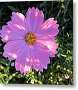Another New And Bigger Pink Metal Print