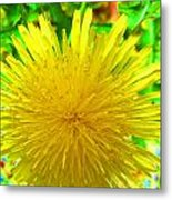 Another Variety Dandelion Metal Print