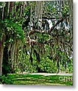 Savannah National Wildlife Refuge Metal Print