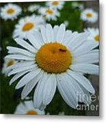 Ant Nothing Sweeter Than My Little Daisy Metal Print