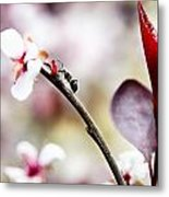 Ant On A Plant1 Metal Print