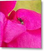Ant On Pink Metal Print