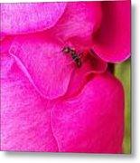 Ant On Pink Petals Metal Print