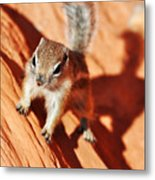 Antelope Ground Squirrel Metal Print