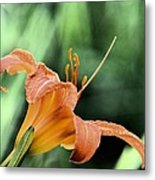 Anthers Aglow Metal Print