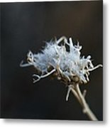 Anticipating Spring Metal Print