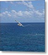 Antigua - In Flight Metal Print