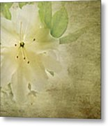 Antique Azalea Metal Print