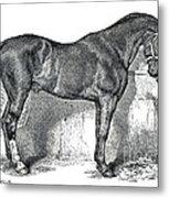 Antique Horse Drawing Metal Print