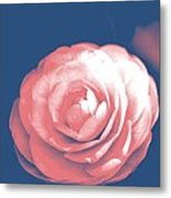 Antique Pink Camellia Flower Metal Print