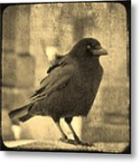 Antique Sepia Crow Metal Print