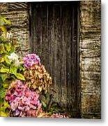 Antique Wooden Door And Hortensia Metal Print