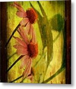 Antiqued Cone Flowers Metal Print