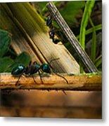 Ants Adventure 2 Metal Print
