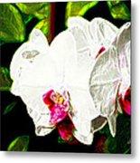 Aos White Orchid 2 Metal Print