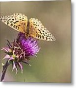 Aphrodite Butterfly On A Purple Thistle Metal Print