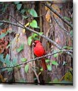 Appalachian Cardinal Metal Print