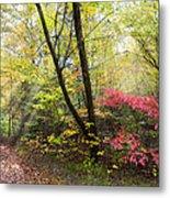 Appalachian Mountain Trail Metal Print
