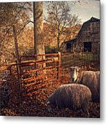 Appalachian Sheep Metal Print by William Schmid
