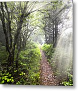 Appalachian Trail Metal Print by Debra and Dave Vanderlaan