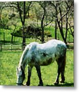 Appaloosa In Pasture Metal Print