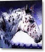 Appaloosa Pony Metal Print by Roger D Hale