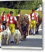 Appenzell Parade Of Cows Metal Print