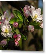 Apple Blossom 3 Metal Print