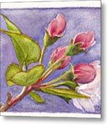 Apple Blossom Buds Metal Print
