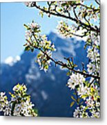 Apple Blossoms Frame The Rockies Metal Print