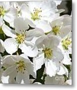 Apple Blossoms In Spring Metal Print