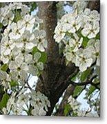 Apple Blossoms Metal Print by Randi Shenkman
