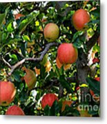 Apple Harvest - Digital Painting Metal Print