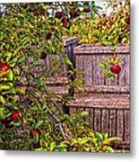 Apple Orchard Harvest Metal Print