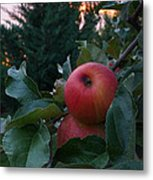 Apple Sunset Metal Print