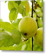 Apple Taste Of Summer 3 Metal Print