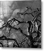 Apple Tree Bw Metal Print