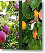 Apples And Apricots Metal Print by Will Borden