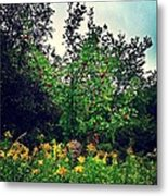 Apples And Hornets 2 Metal Print