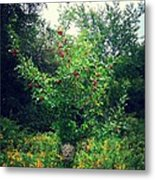 Apples And Hornets Metal Print