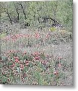 Apples Galore Metal Print