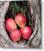 Apples In Tree Metal Print