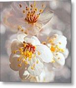 Apricot Blooms Metal Print