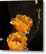 Apricot Blossoms Metal Print