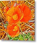 Apricot Globemallow In Vermilion Cliffs National Monument-arizona Metal Print