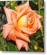 Apricot Nectar Rose Metal Print