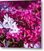 April Showers Mean May Flowers Metal Print